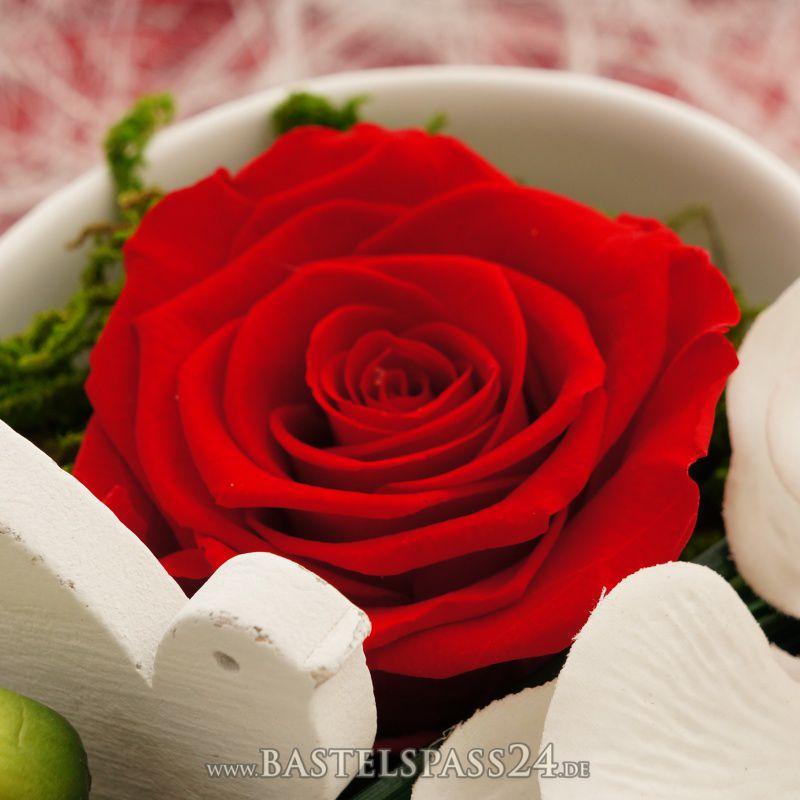 tischdeko hochzeit rot wei klassisch mit rosen pr pariert orchideen in h. Black Bedroom Furniture Sets. Home Design Ideas