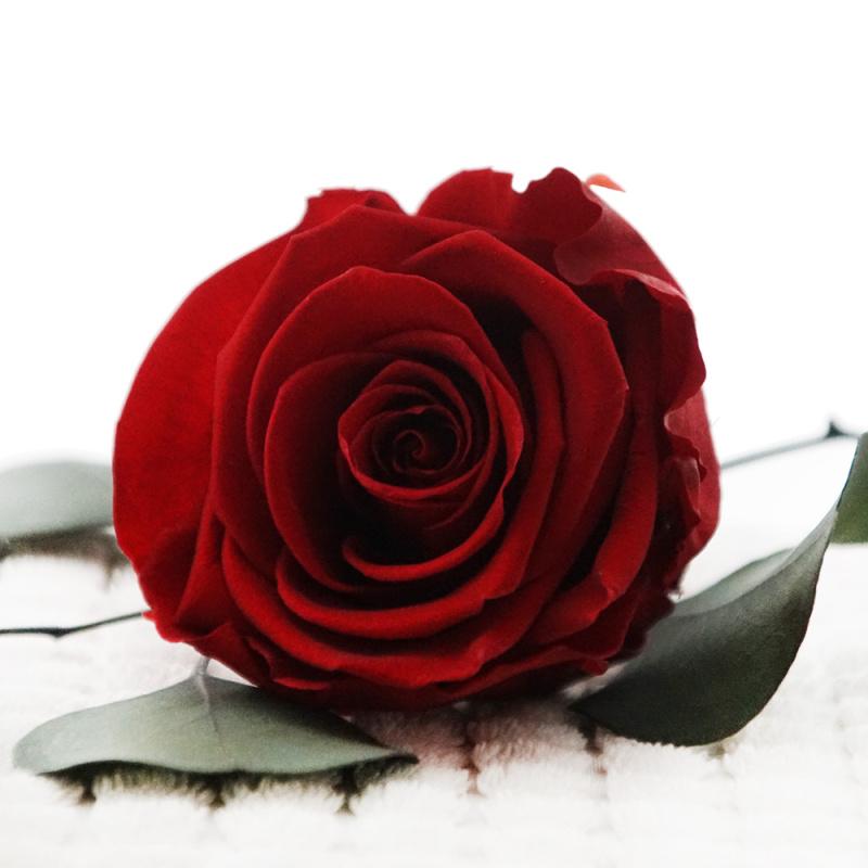 Langzeitrosen VE 1 Stk, große präparierte Rosen-stabilisier