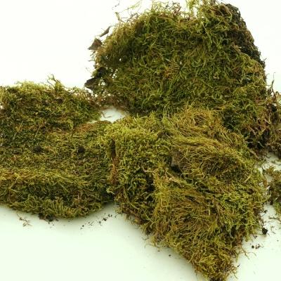 Plattenmoos Moos Zum Basteln Natur Grün Natürliches Moos Ca 100g
