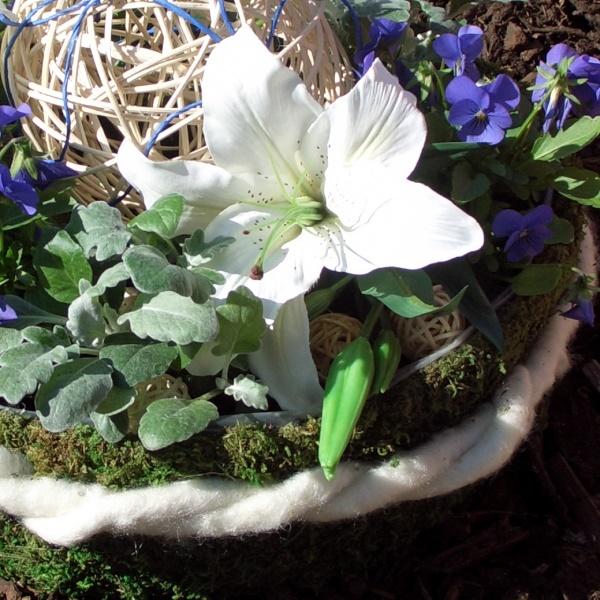 grabschmuck im moospflanzring schale zum pflanzen aus. Black Bedroom Furniture Sets. Home Design Ideas