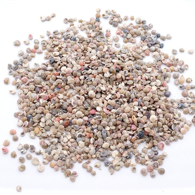 schnecken sand ca 50 g minischnecken als sand zum streuen f r t. Black Bedroom Furniture Sets. Home Design Ideas