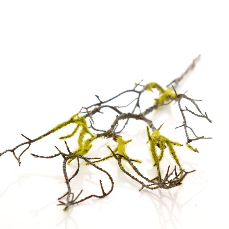 Pflanzgefäße Außenbereich zweige mit moos mooszweig l54 cm braun grün dekozweig mit drah