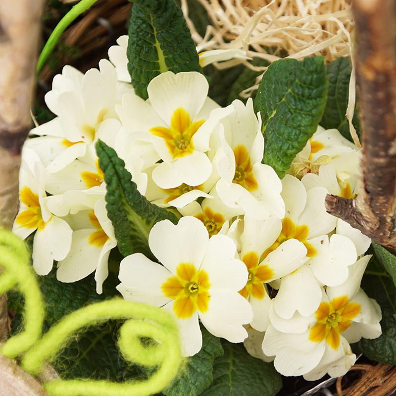 Pflanzschale Fr Hjahr Mit Zweigen Und Deko Blumen Selber