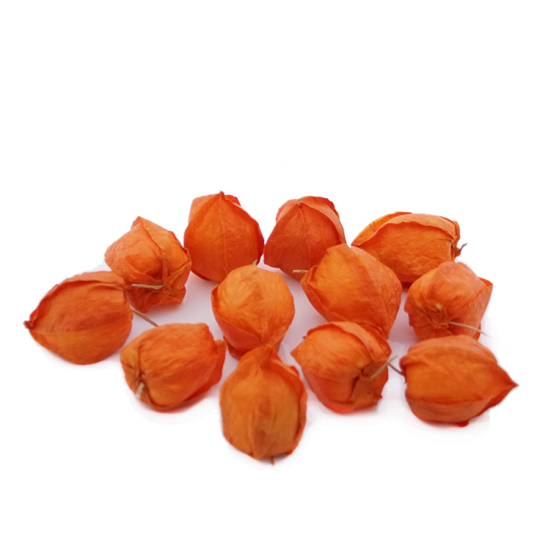 Physalis orange 16 st ck f r die herbstdeko basteln bastel - Basteln herbstdeko ...