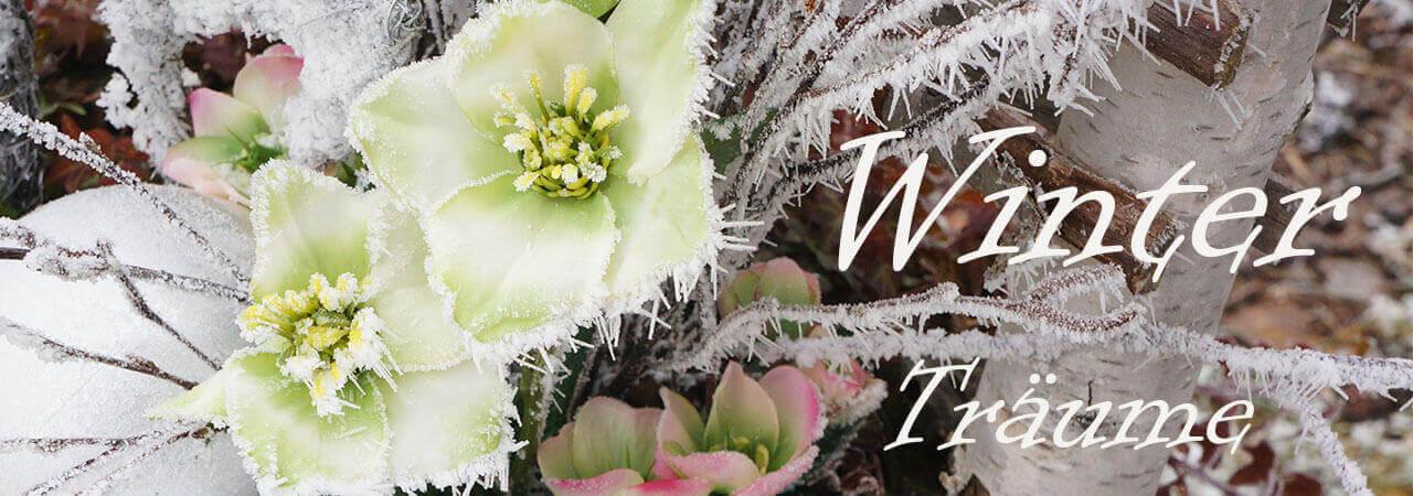 Winterdeko mit Christrosen, Seidenblumen für