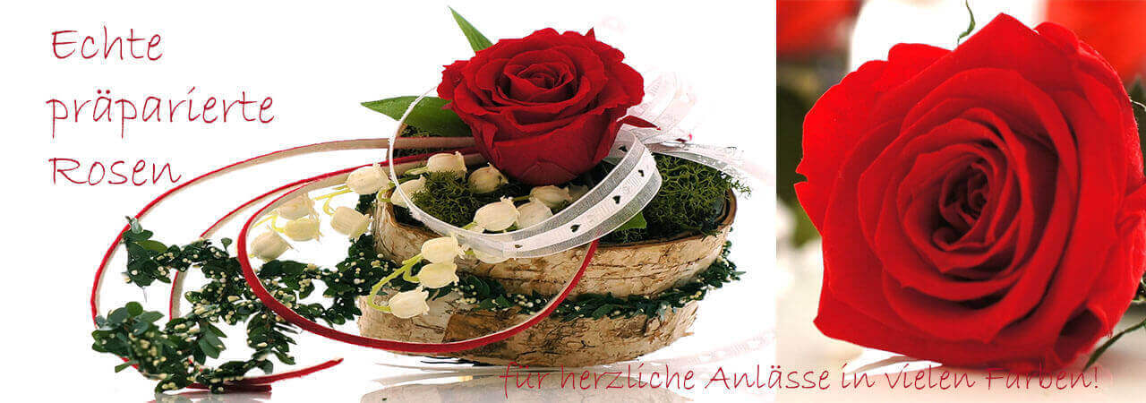 Rosen präpariert, Langzeitrosen, Longlive Ros