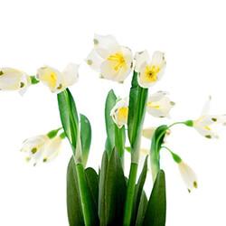 Seidenblumen für Frühjahr