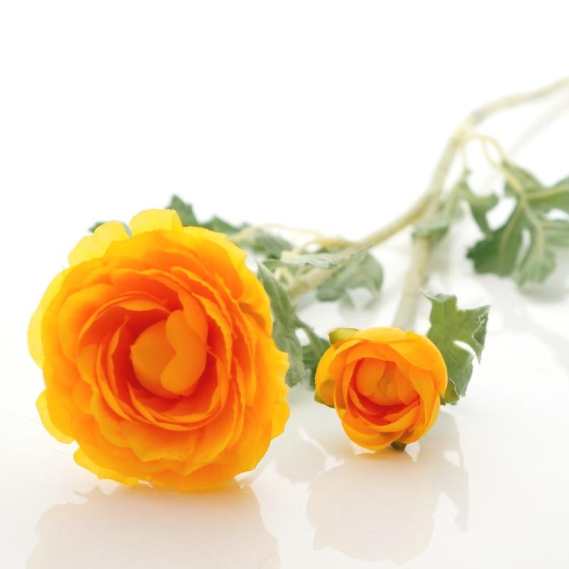 Ranunkeln Seidenblumen