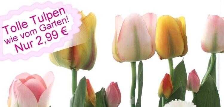 Seidenblumen-Frühjahr
